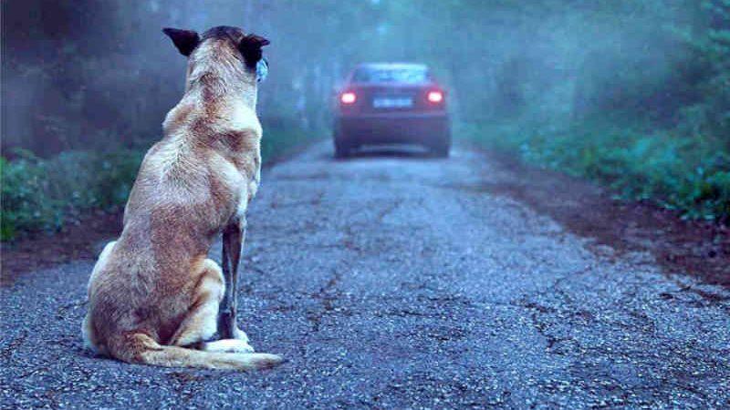 Maus tratos a animal, é crime ambiental
