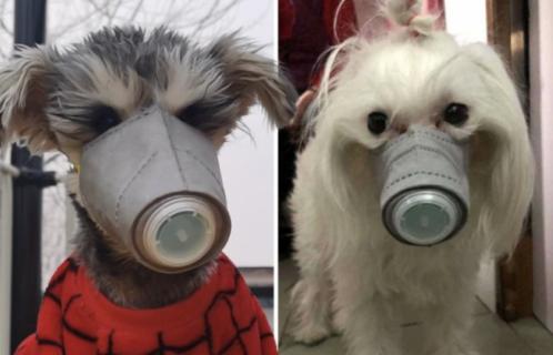 Cachorro é isolado após teste positivo de coronavírus em Hong Kong