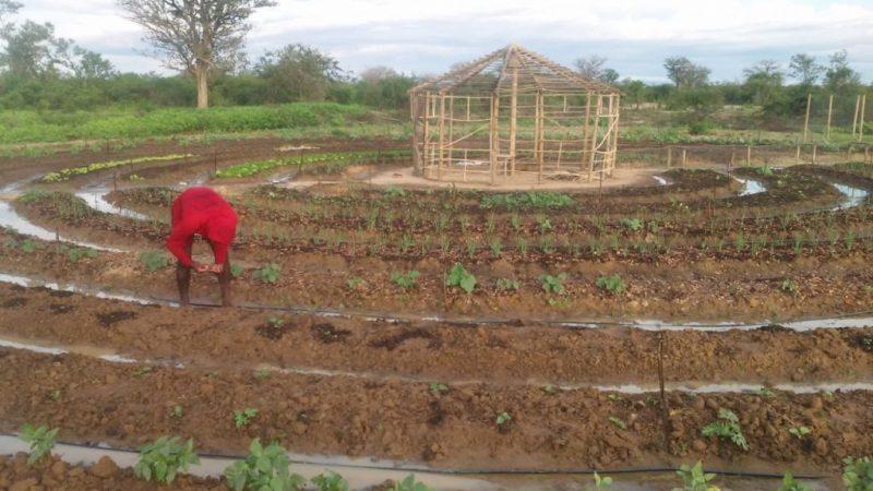 Comunidade quilombola de Bom Jesus da Lapa comercializa produção agroecológica