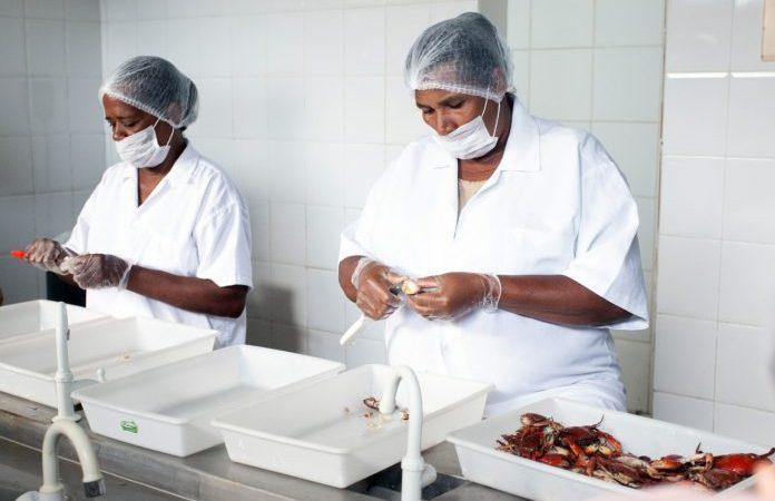 Agroindústria de pescado melhora renda de 400 famílias de marisqueiras e pescadores de Itaparica